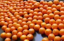 jus-d-oranges-a-la-marocaine