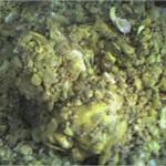 Rfissa aux poulet lentilles et fêves