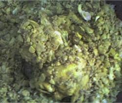 rfissa-poulet-lentilles-feves